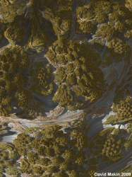 Lichen #3