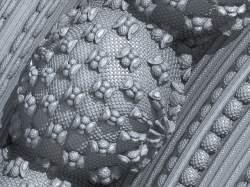 Silver Eggs detail
