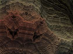 Diatom Micrograph