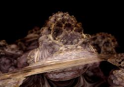 Mineral Bulb