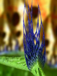 blue bud