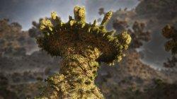 Mescaline Mushroom