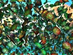 The Feather Garden