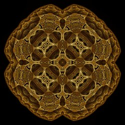 Looking into the Soul of a Fractal
