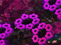 Non NASA Mars image - Pinkinninnies