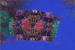 Non NASA Mars Image - Jewellery Box Coral