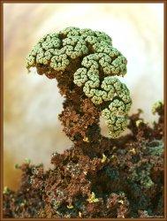 Micro Coral