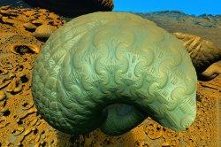 Empty Brain In The Desert Of Ignorance