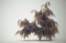 IFS Tree