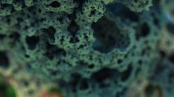 Corel reefs