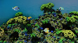 Tropical Reef