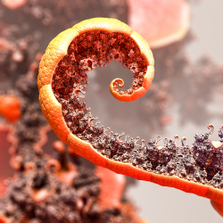 New Life on an Old Orange Peel