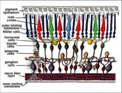 the retina sensor sytem wiring