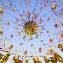 Organic flower #008
