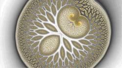 Golden Brain Fruit