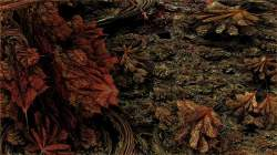Autumn Forest Floor