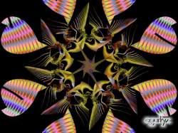 Serie octagonales-1