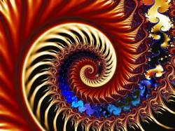 Shells and Ferns