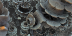 Stone flowers (detail)