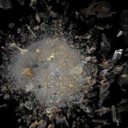 Radiolaria pieces