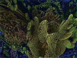 Coraldive 1