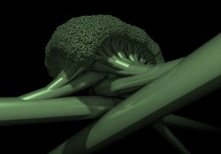 Broccoli Tubes