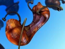 Martian Nut