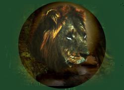 My Beautiful Lion