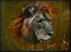My Lion redone