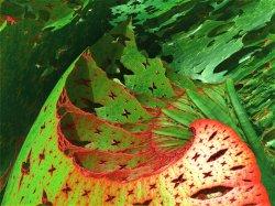 Chaos in Laos - Fractapilla damage in the garden