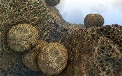Dead Urchin Reef