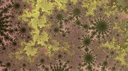 Minerals and Lichens