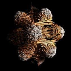 Thorned urchin