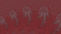Jellyfish Chorus Line