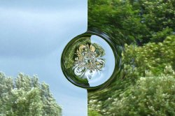 A green fractal world.