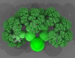 L-system tree