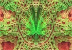 canna power flower
