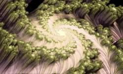 Spiral Galaxy III
