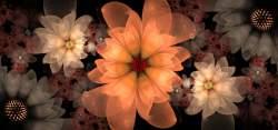 Julia flowers