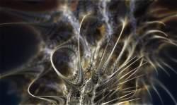 Microscopic focus close plane