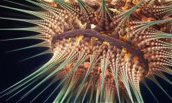 Bioluminiscent Life form 3 close up