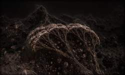 Life on an Asteroid Surface