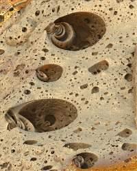 Unknow fosils